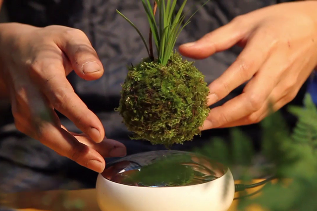 Air Bonsai levitating plant merges traditional art with