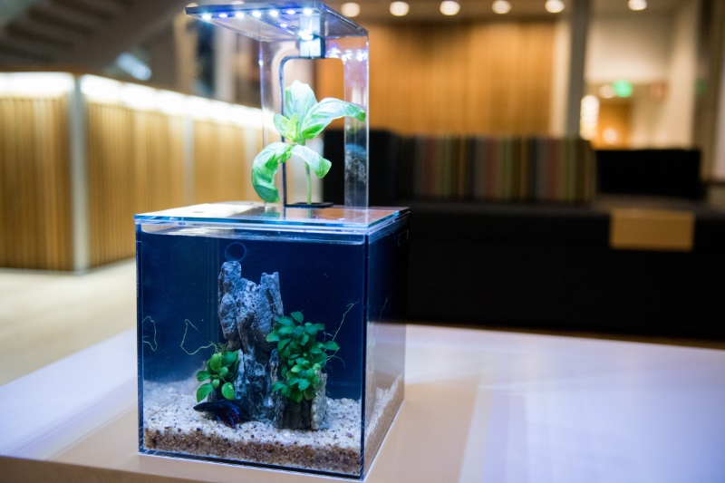 portable aquarium