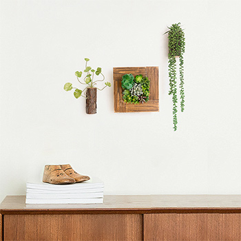 Artistic Wall Plants