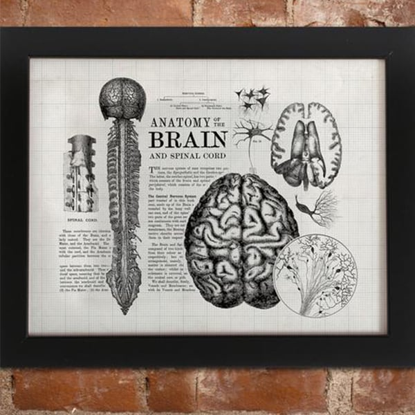 product image for Anatomical Art Print