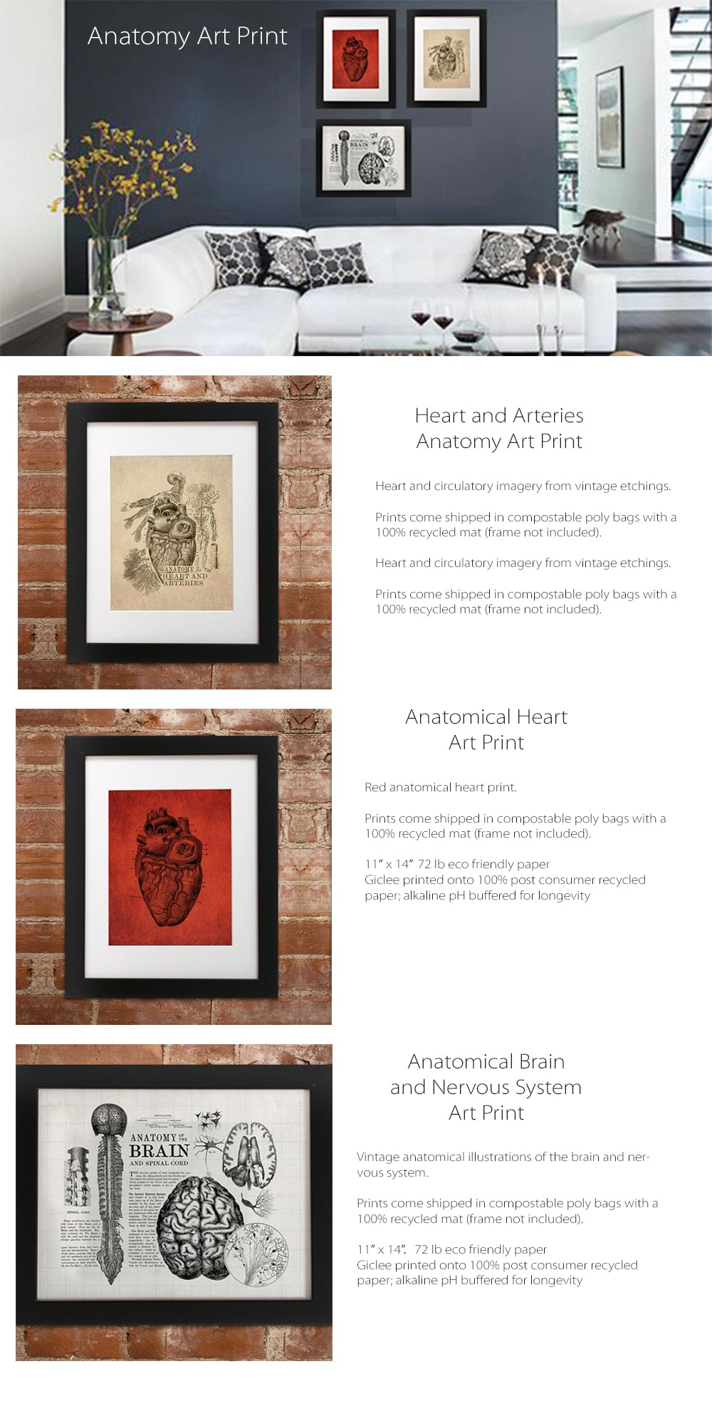 Anatomical Art Print Vintage Anatomical Illustrations