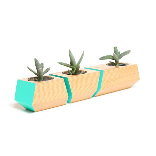 Boxcar Douglas Fir and Teal