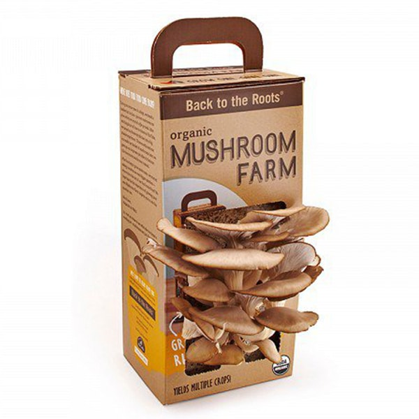 product thumbnail image for Mushroom Farm