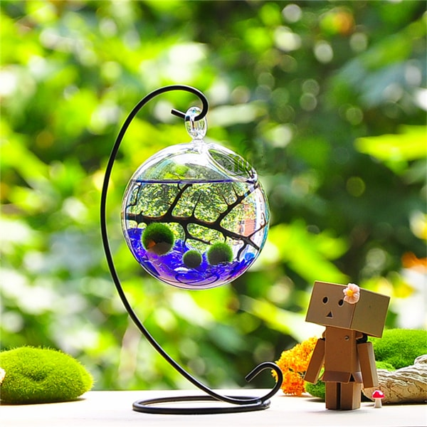 product image for Marimo Aquarium Kit (Metal Stand)