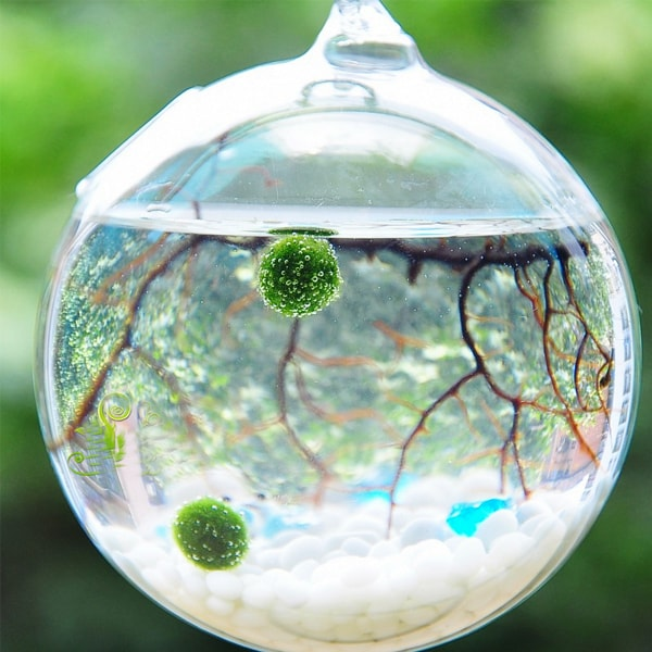 product thumbnail image for Marimo Aquarium Kit (Metal Stand)