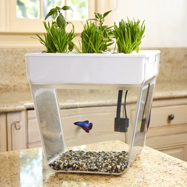 Water garden out of stock apollobox for Water garden fish tank