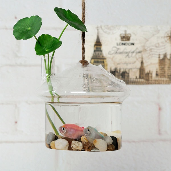 product thumbnail image for Hanging Fish Tank