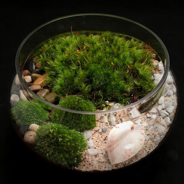 product image for Valentine's Day Terrarium