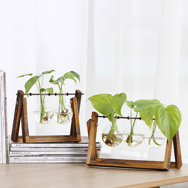 Hydroponics Glass Vase with Wood Stand