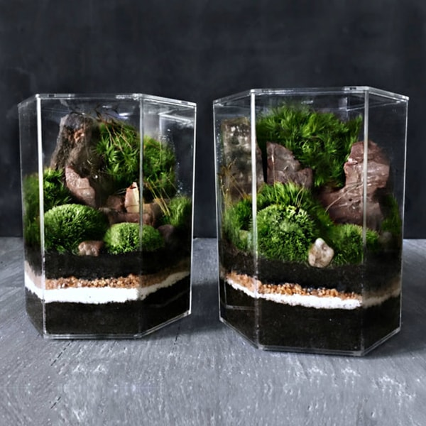 Desktop Landscape Terrarium Apollobox