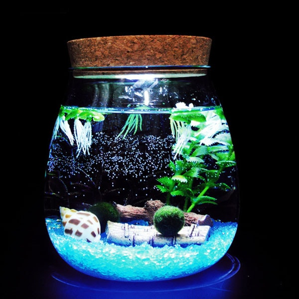 product thumbnail image for Marimo DIY Terrarium with LED Light