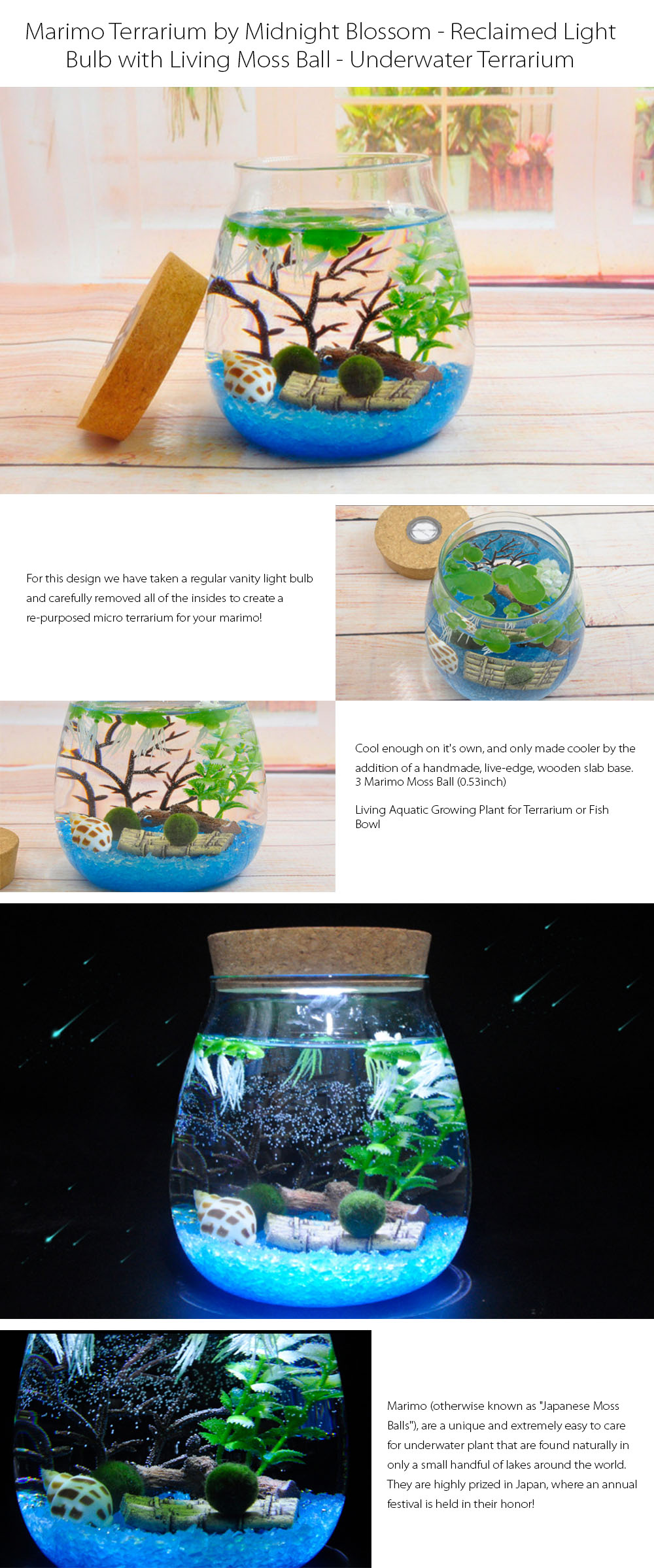 Marimo DIY Terrarium with LED Light Bring Zen to the Den