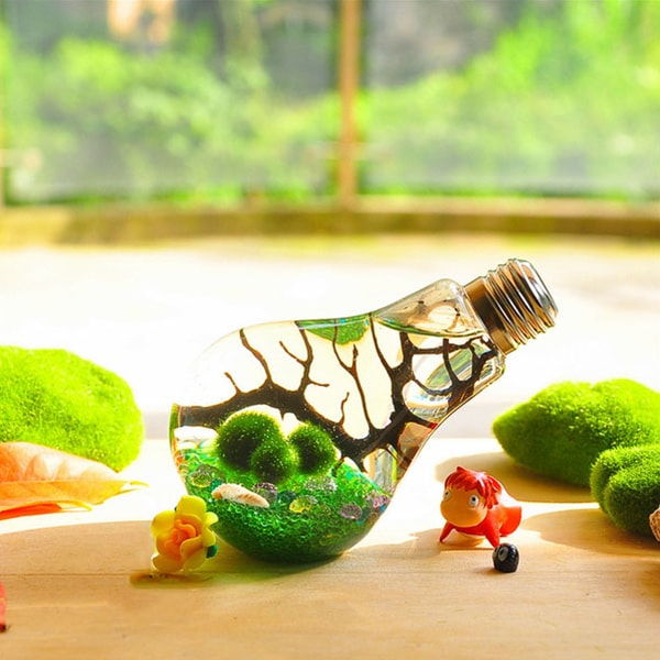 product image for Marimo Bulb Terrarium