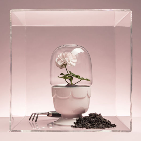 Greenhouse Planter With a Glass Dome