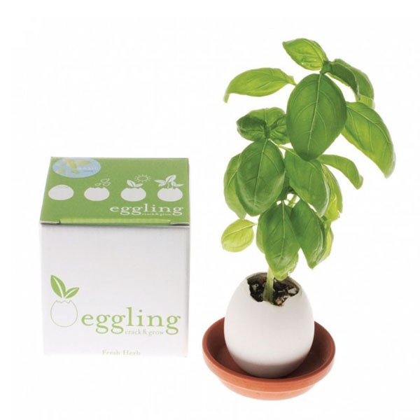 product thumbnail image for Eggling