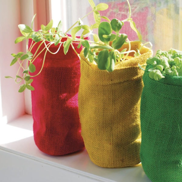product thumbnail image for Bag Plants