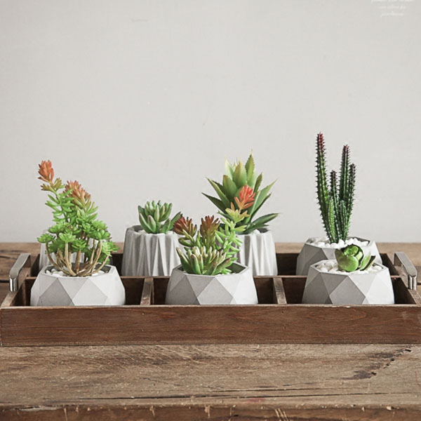 unique cactus and succulent decor