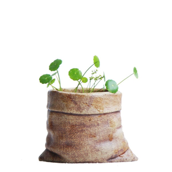 product thumbnail image for Mini Ceramic Planters