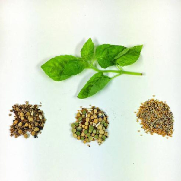 product thumbnail image for Culinary Herb DIY Kit