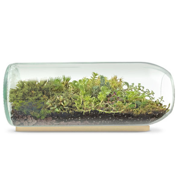 product thumbnail image for Terrarium Wine Bottle