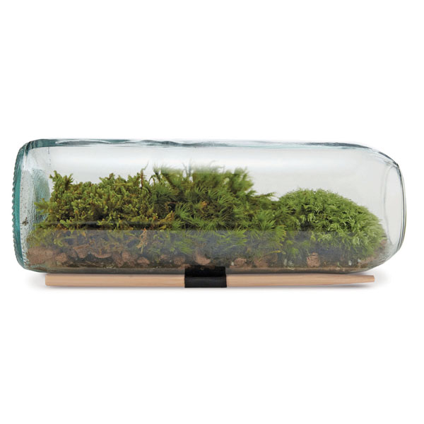 product image for Terrarium Wine Bottle