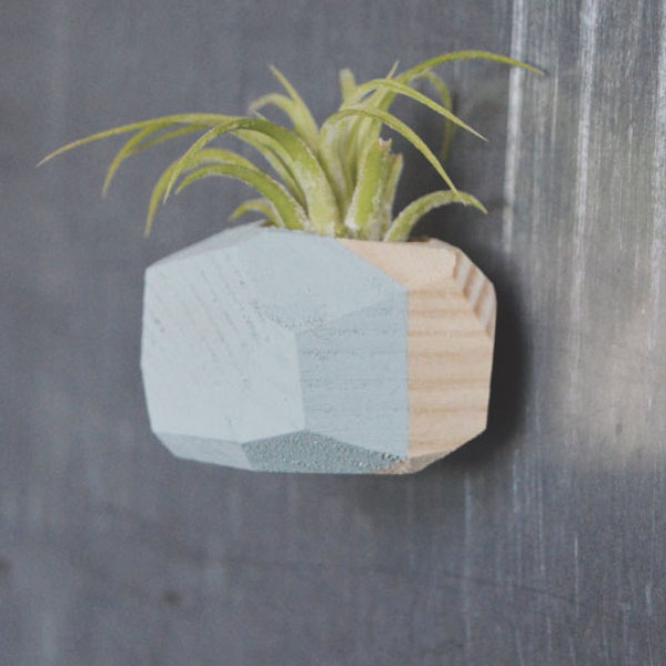 Mini Geo Magnet w/Air Plant