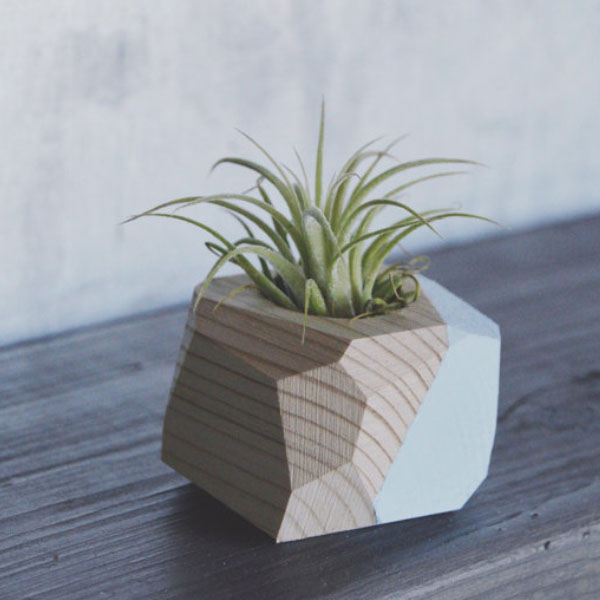 product thumbnail image for Mini Geo Planter w/Air Plant