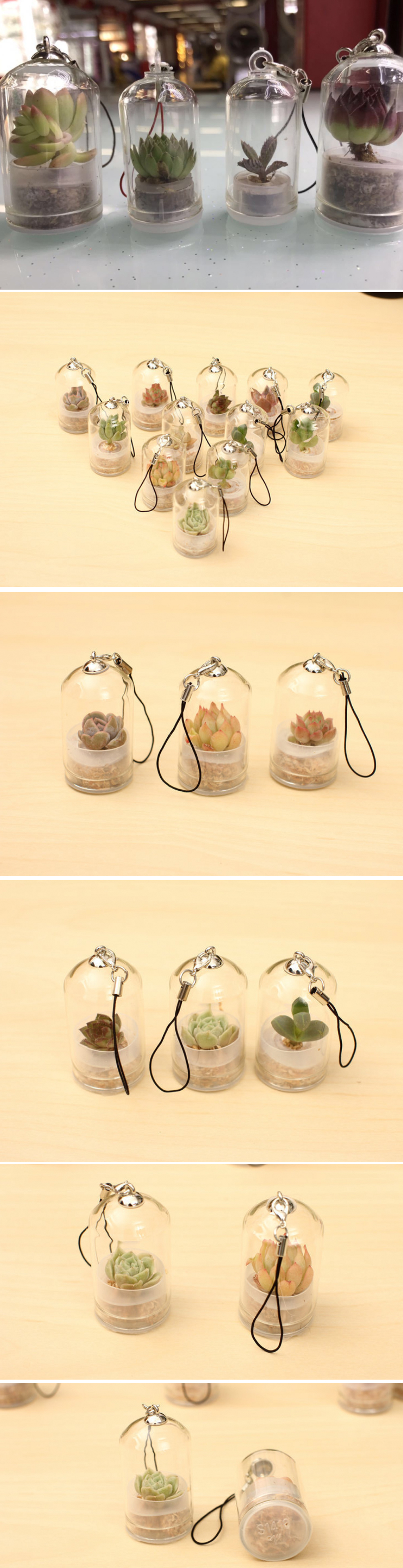 Miniature Plant Keychain Cute Mobile Greenhouse
