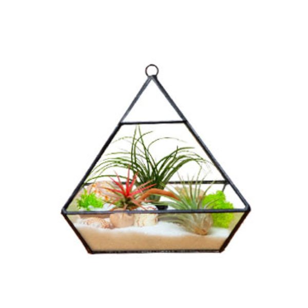 product image for Tabletop Air Plant Terrarium