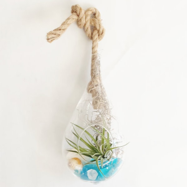 Tear Drop Terrarium With Air Plant