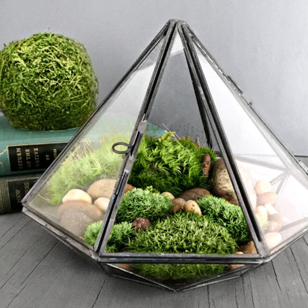 geometric glass diamond terrarium with plants apollobox. Black Bedroom Furniture Sets. Home Design Ideas