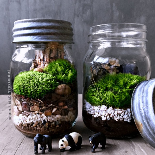 beautiful terrarium