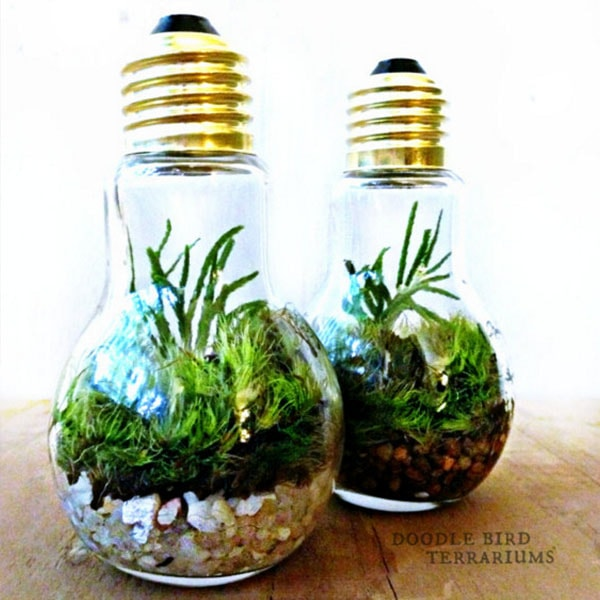 Light Bulb Plant Terrarium (currently unavailable)