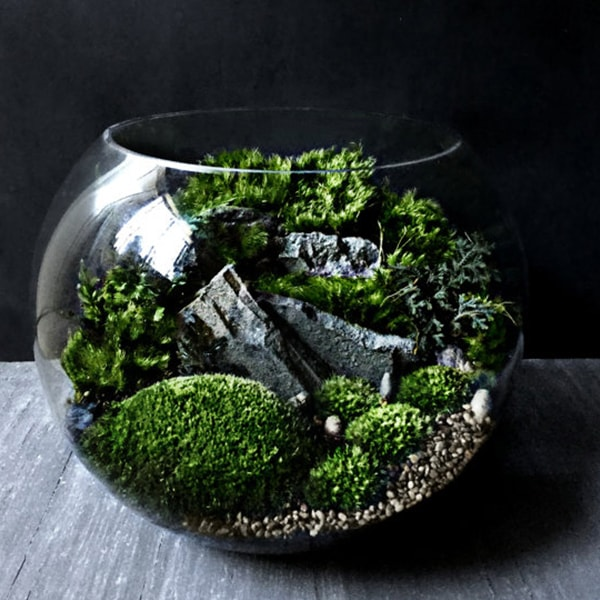 Bio-Bowl Forest World Terrarium
