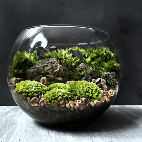 product image for Bio-Bowl Forest World Terrarium - Bio-Bowl Forest World Terrarium - ApolloBox