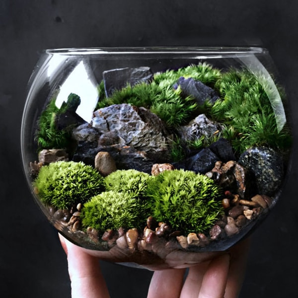 Bio-Bowl Forest World Terrarium - ApolloBox
