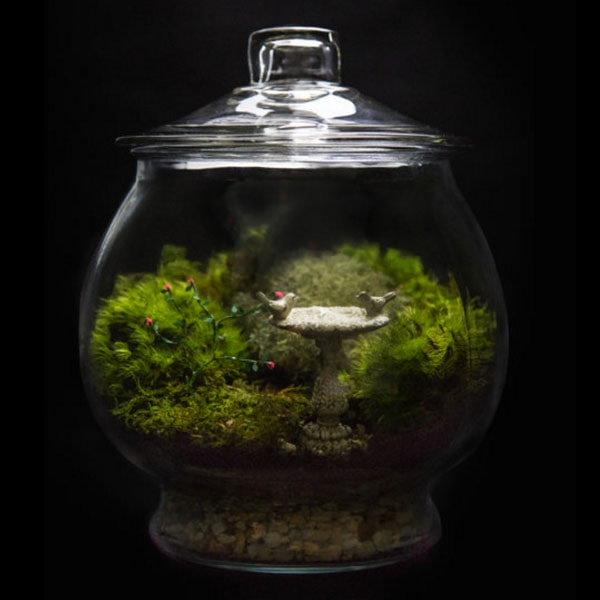 product image for Rose Garden Terrarium