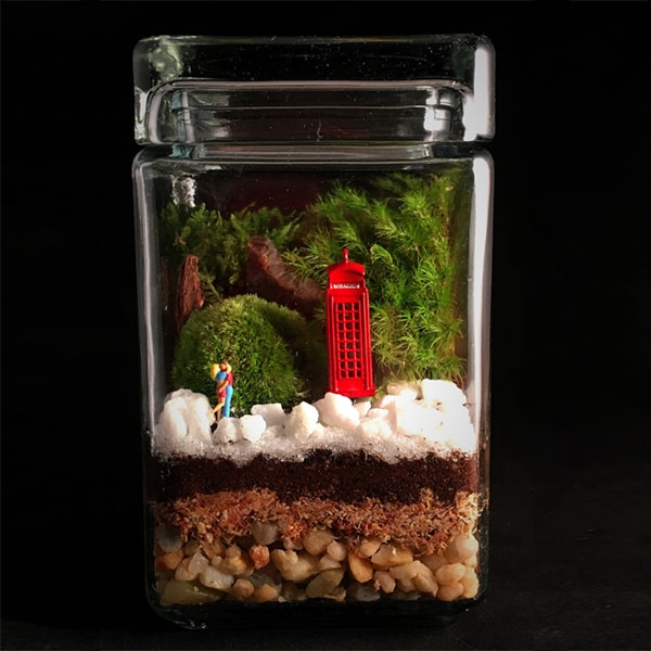 London Calling Terrarium